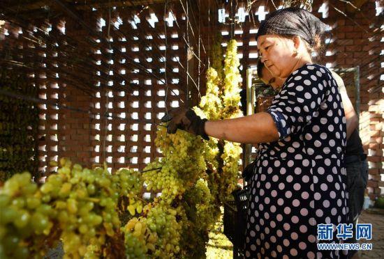 (社会)(3)吐鲁番晾晒葡萄