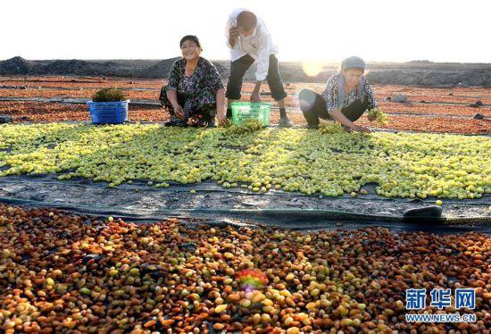 (社会)(2)吐鲁番晾晒葡萄