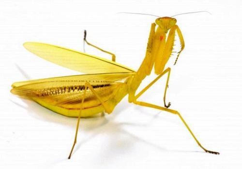 来源:磐田市龙洋昆虫自然观察公园