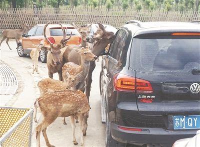 长假将至 常州淹城动物园游人亲近动物