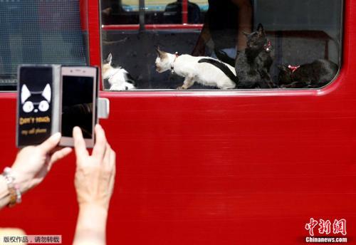 """日本现""""猫咪列车"""" 旨在提醒公众关注流浪猫"""