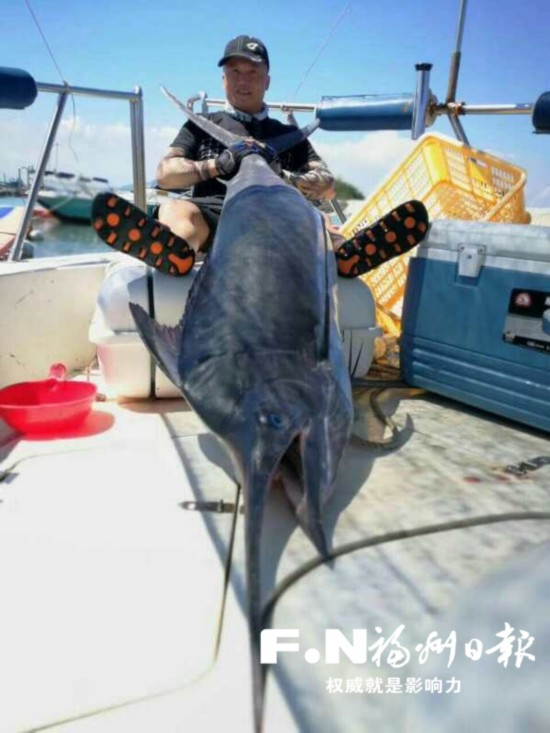 罕见!一条马林鱼有50公斤重 拖上船花了20分钟