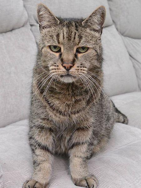 世界最长寿家猫去世终年32岁 相当于人类144岁(图)
