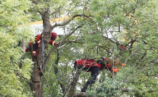 英五旬男子驾驶滑翔机被困30米树上成功获救