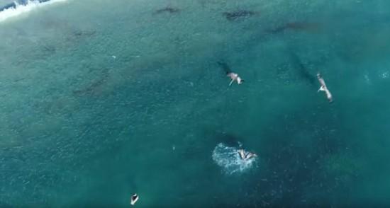 美国一海滩出现大量鲻鱼引鲨鱼鹈鹕争相觅食