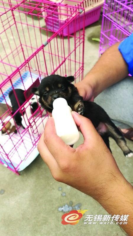 5只小奶狗遭遗弃 无锡城管队员帮忙觅归宿