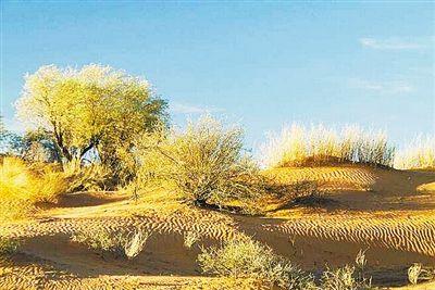 卡拉哈里沙漠谜城