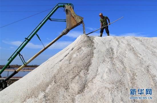 组图:走进海盐生产基地
