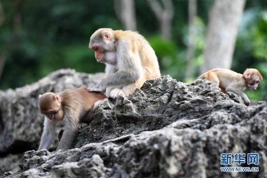 山清水秀猴子乐