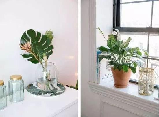 时尚    看到这你可能会说,我也在养植物,为啥 ins 博主们晒出的植物