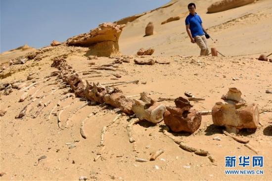 沙漠深處的古鯨博物館