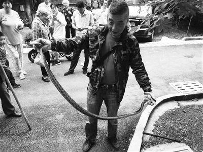 1.8米大蛇爬进南京市民家 保安队长捉蛇后放生