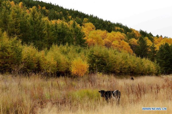 CHINA-INNER MONGOLIA-BAYAN NUR-AUTUMN (CN)