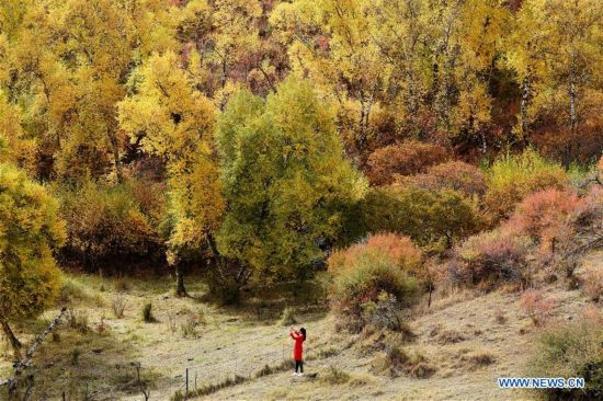 Amazing scenery of Dahuabei forest in China's Inner Mongolia