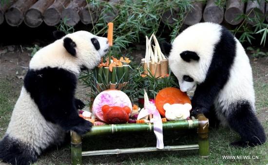 Panda twin cubs celebrate birthday at Shanghai Wild Animal Park