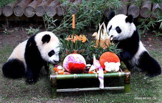 CHINA-SHANGHAI-PANDA CUBS-BIRTHDAY (CN)