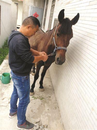 镇江市民价值2万元爱马走失 警方助其寻回