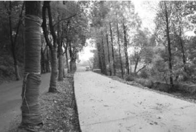 东湖绿道二期森林道市政道路全线贯通 5.5公里绿道铺装彩色沥青