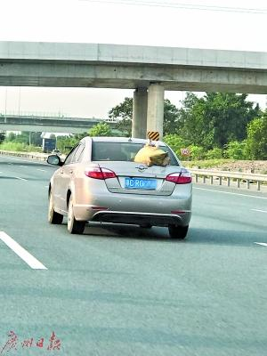 轿车车尾绑鸭子上高速 车主:让鸭子透透风