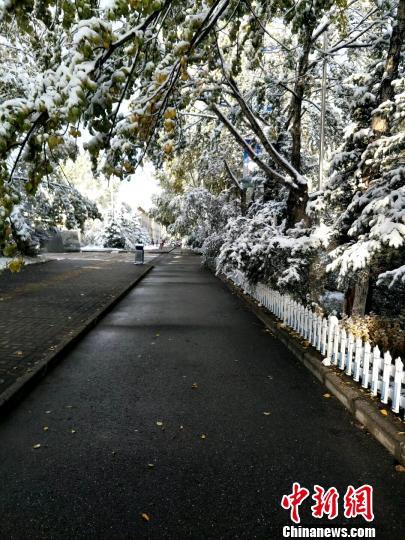 青海西宁迎金秋首场降雪气象局发四条寒潮黄色预警