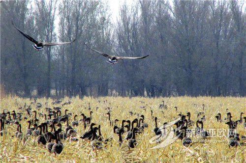 新疆裕民县:乡村生态美