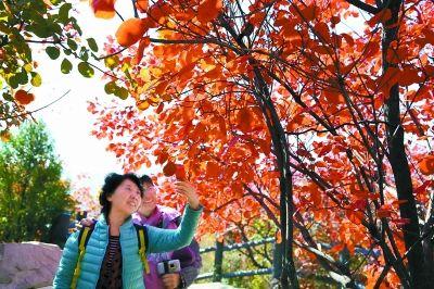 金秋北京11处园林景区宜赏红