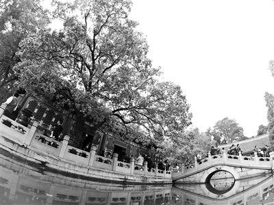 北京市属公园推20处秋花观赏点