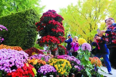 北京菊花展亮相北海公园