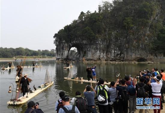 广西桂林:鱼鹰表演引游客