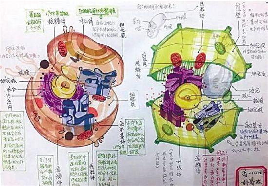 高中生手绘动植物细胞,简直以假乱真