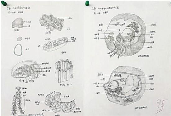 """一名同学的参赛作品为""""生物各细胞结构示意图"""""""
