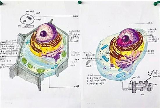 一名同学的参赛作品为生物各细胞结构示意图   25日早上,记者被朋友圈里的一组手绘稿惊艳住了,准确地说,是动植物细胞亚显微结果模式图。这可不是生物课本上的插画,而是高中生的手绘稿。这都是杭州学军中学学生的作品。   对比课本上的原图,简直以假乱真,甚至比真的更令人惊艳。   为啥那么多高中生都迷上了画细胞?因为学军中学最近正在举办手绘动植物细胞大赛。   不止画得精细,还有学生在手绘细胞图上,针对每个细胞体,做了详细标注,感觉每张画都能拿来当生物参考书。   晒出这组图片的,是杭州学军