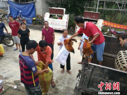 海南琼中黎族村庄发展林下养殖业带动村民增收