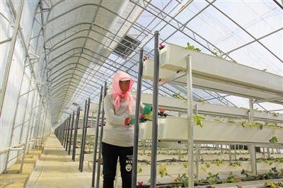 彭阳:科技化温棚种植富民利农