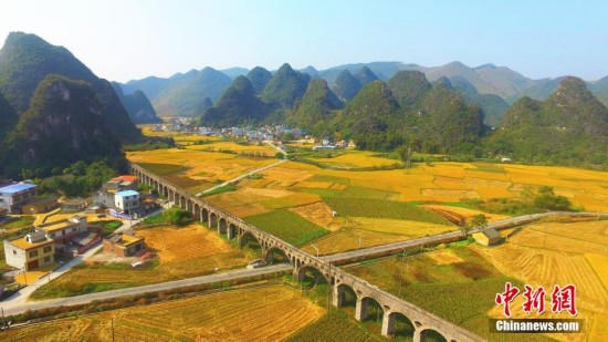 航拍广西柳州万亩稻田披金美如画