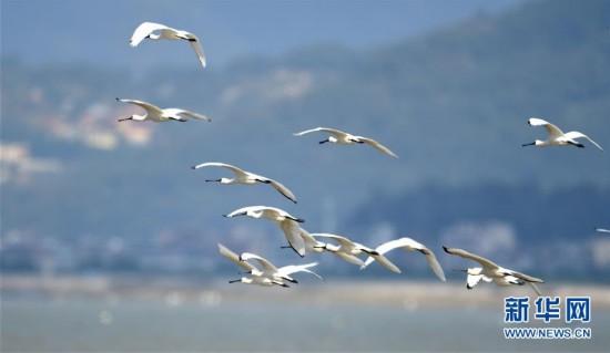 闽江口湿地成鸟类天堂