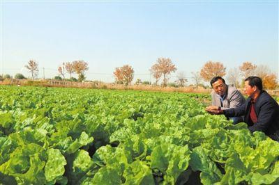 设施农业抢滩市场