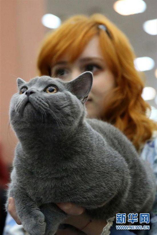 国际猫咪选秀赛