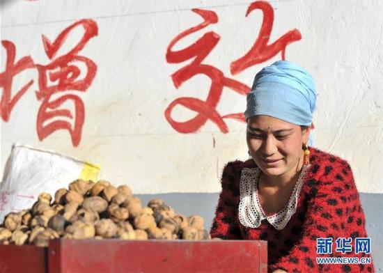 (经济)(2)新疆叶城:特色林果助农增收
