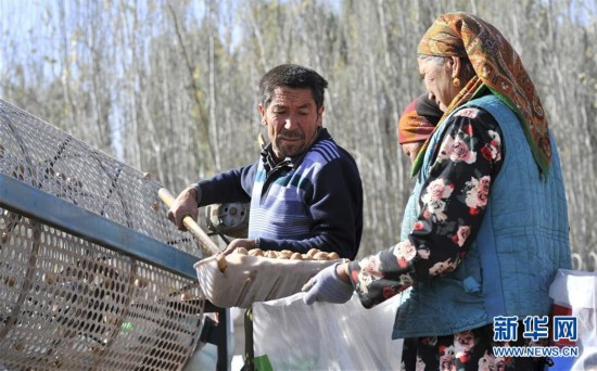 新疆叶城:特色林果助农增收