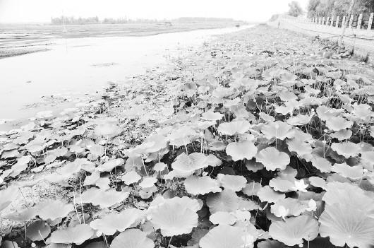 《指南》明确,本次划界确权工作的重点是流域面积在50平方公里以上的河道和常年水面面积在1平方公里以上的湖泊。(资料片)