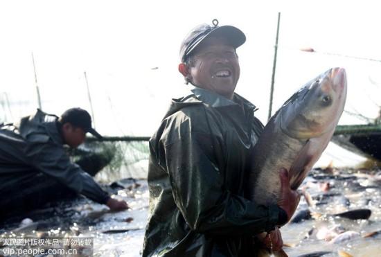 安徽铜陵:陈瑶湖渔业开捕