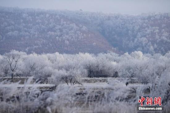 中俄界江两岸呈现雾凇美景