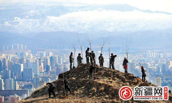 11月5日,雅玛里克山,为了实现树上山头,工人正在一个岩石裸露的山头进行人工栽植。