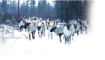 舞动冷资源 内蒙古旅游进入全景时代