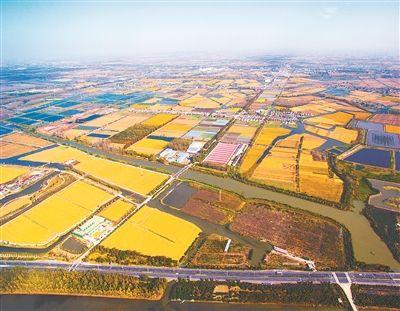 """泰州构建""""环水""""生态系统 呈现一派水乡风景"""