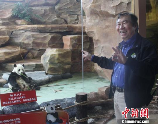 动物园老板蔡亚声介绍说,每只大熊猫一天要吃掉30公斤竹子。 林永传 摄