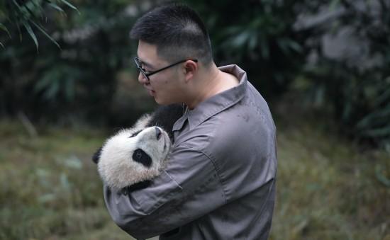 在中国大熊猫保护研究中心雅安碧峰峡基地,饲养员抱着今年新出生的大熊猫宝宝(10月13日摄)。新华社记者薛玉斌摄