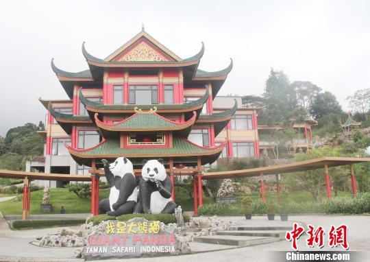 """探访印尼熊猫馆:中国大熊猫开心""""萌萌哒""""(图)"""