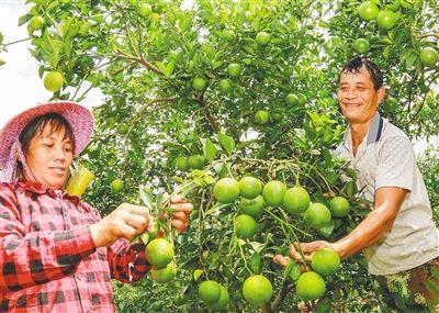 绿橙飘乡季 全域琼中游